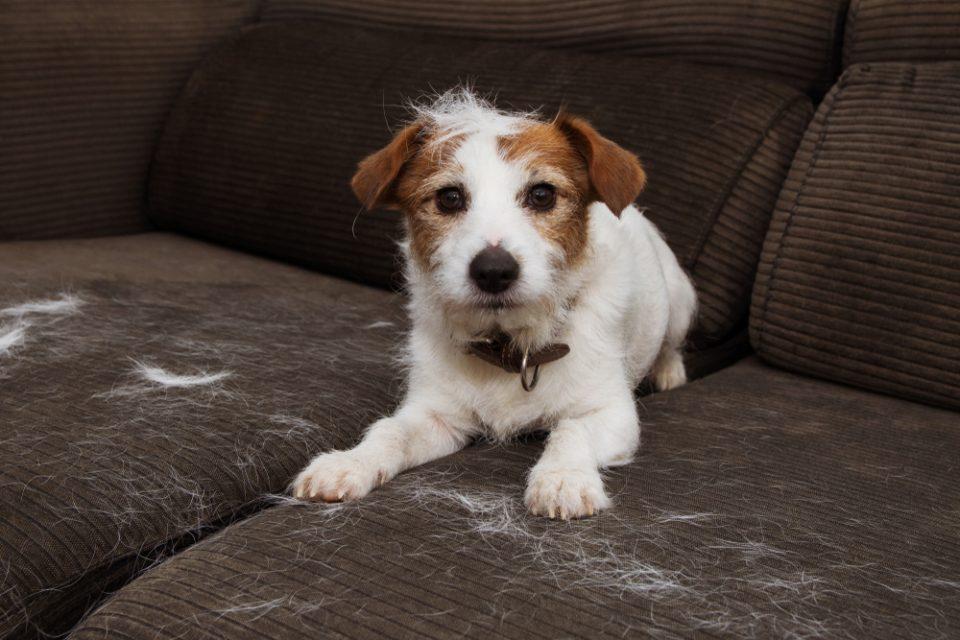 Il cane perde il pelo, cibo contro la caduta del pelo