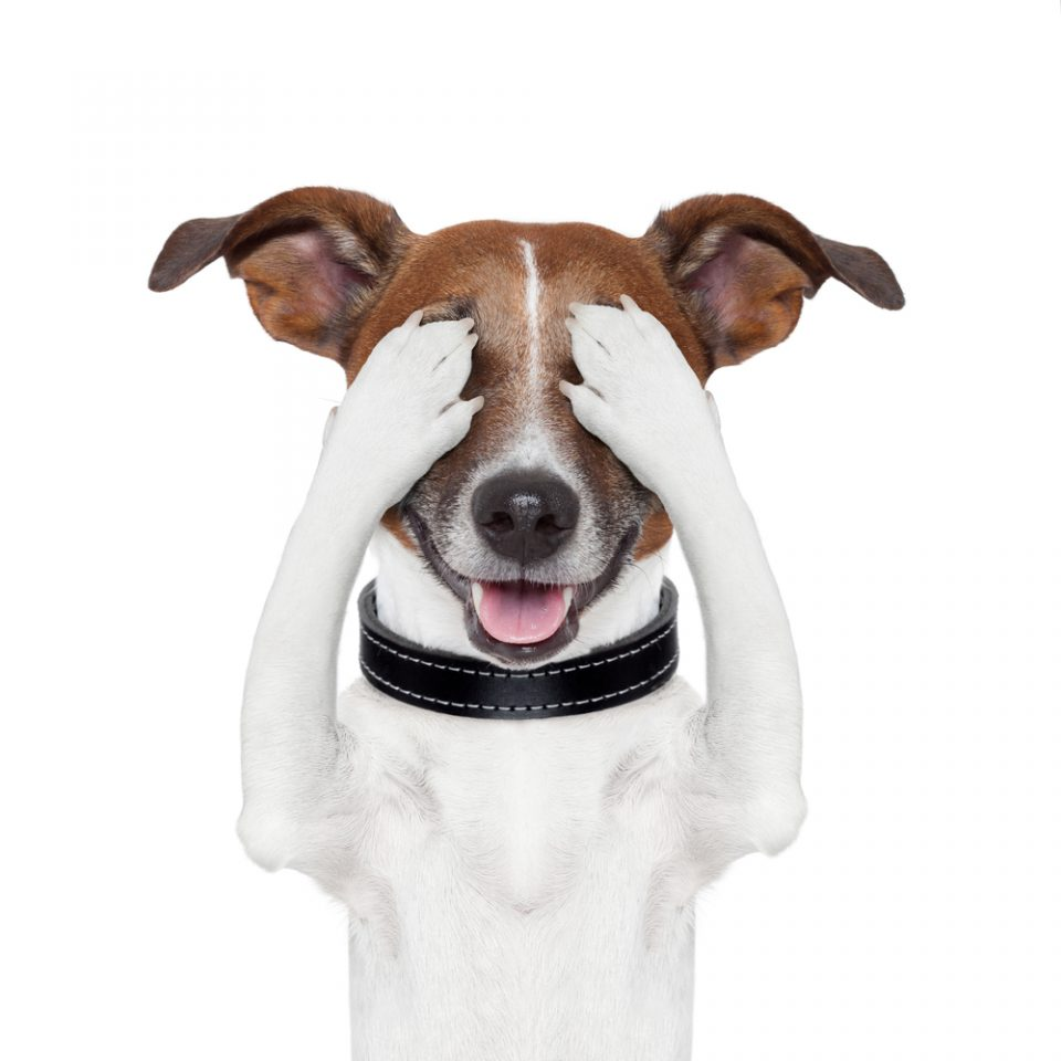 Cibi e ingredienti pericolosi che non fanno bene al cane